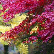 秩父華厳の滝紅葉の画像