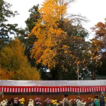 秩父神社紅葉の画像