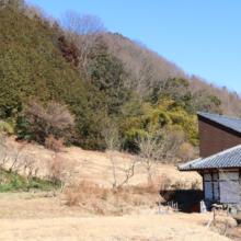 龍勢会館裏の福寿草の画像