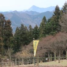 四阿屋山ロウバイの画像