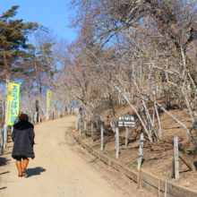 宝登山東ロウバイ園の画像
