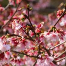 岩田桜の画像