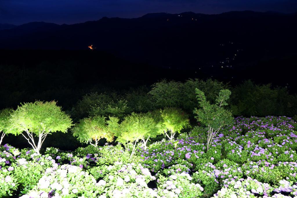 美の山アジサイライトアップの画像