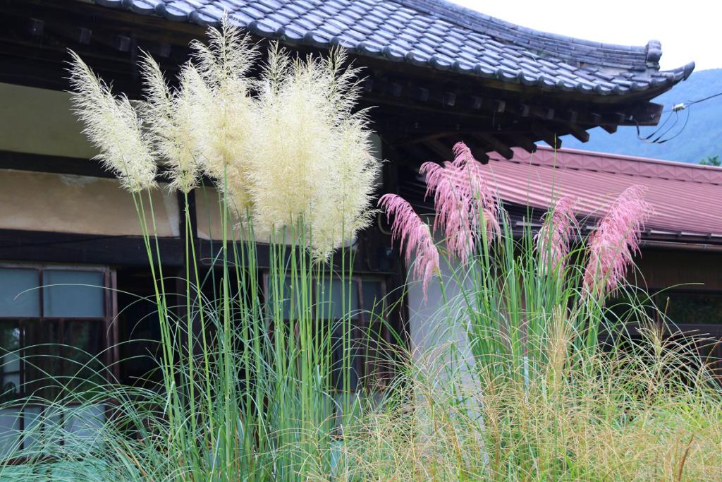 長瀞七草寺尾花の画像