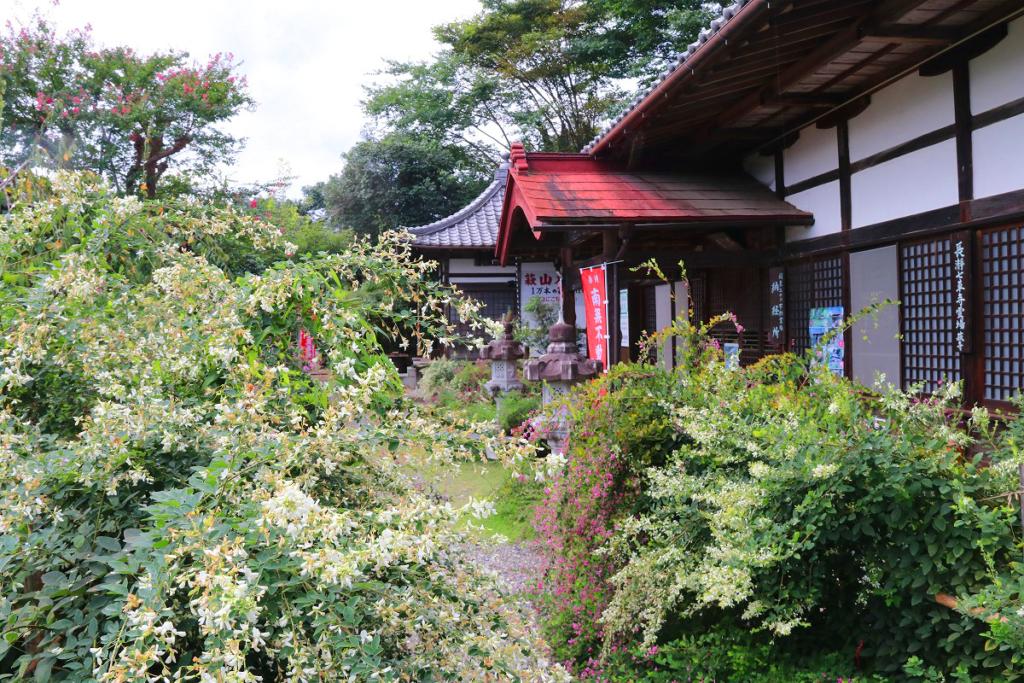 長瀞七草寺萩の画像