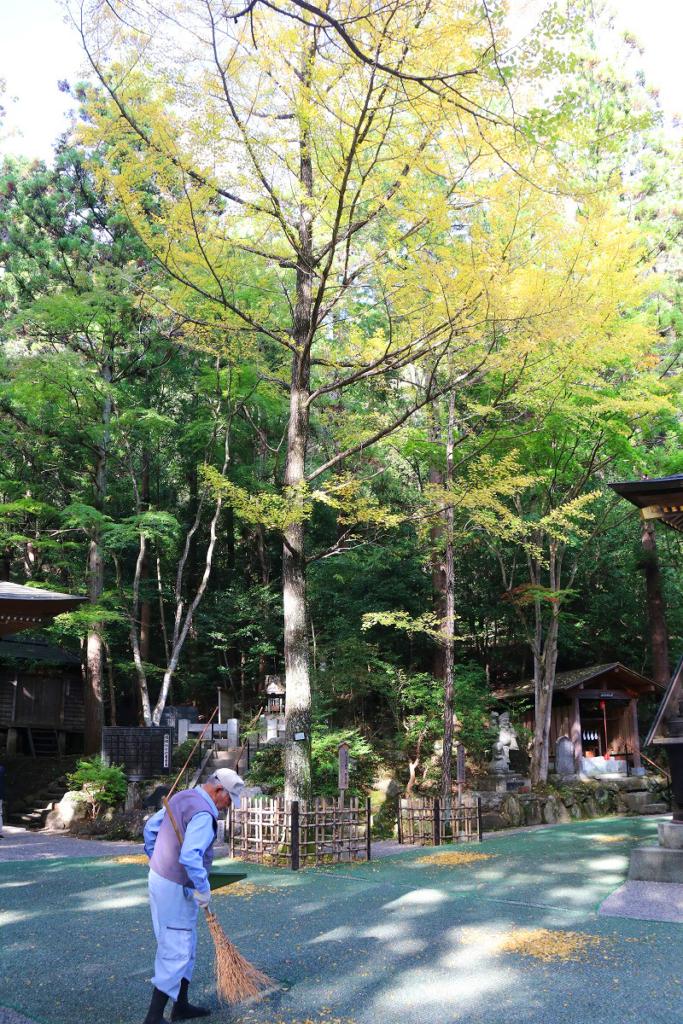 寶登山神社紅葉の画像
