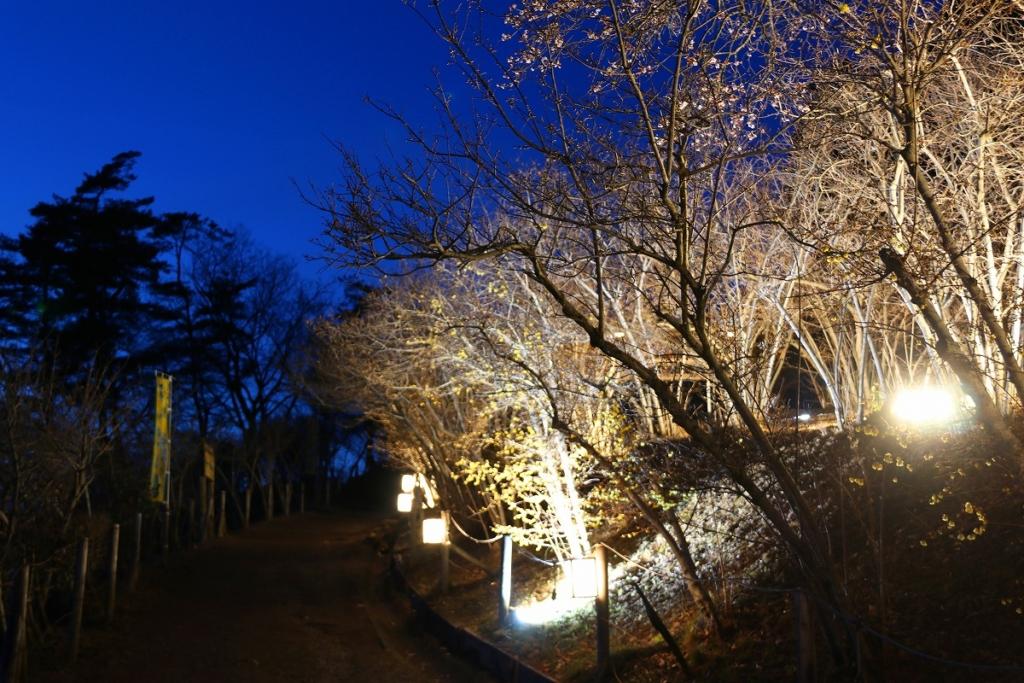 宝登山ロウバイ園ライトアップの画像