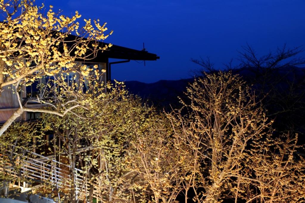 宝登山ロウバイライトアップの画像