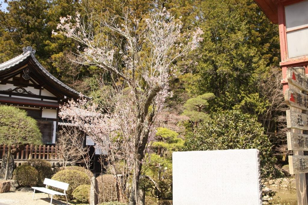 宝登山伊奈桜の画像