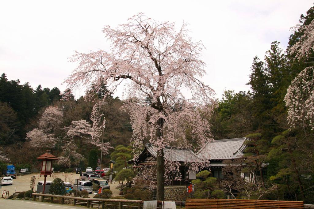 寶登山神社周辺の桜の画像