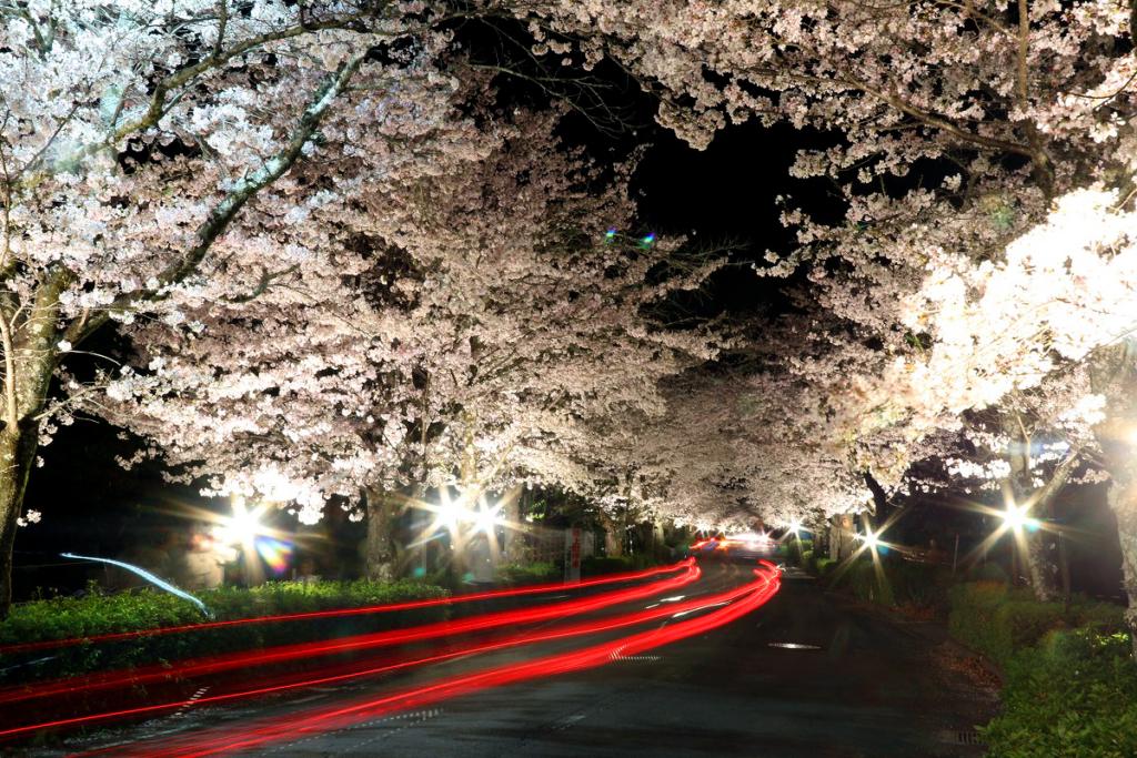 長瀞北桜通りライトアップの画像