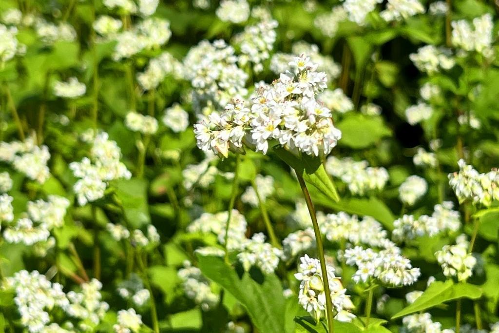荒川そばの花