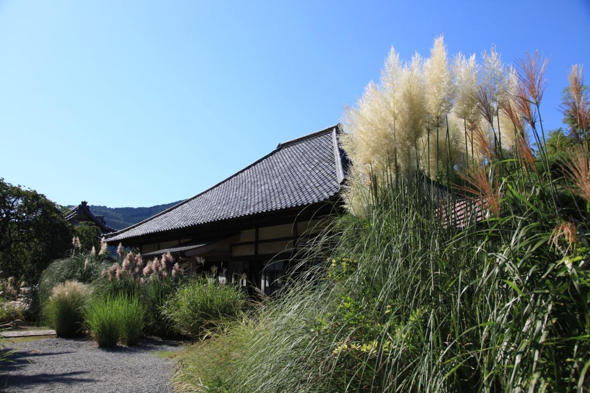 長瀞町 秋の七草 尾花