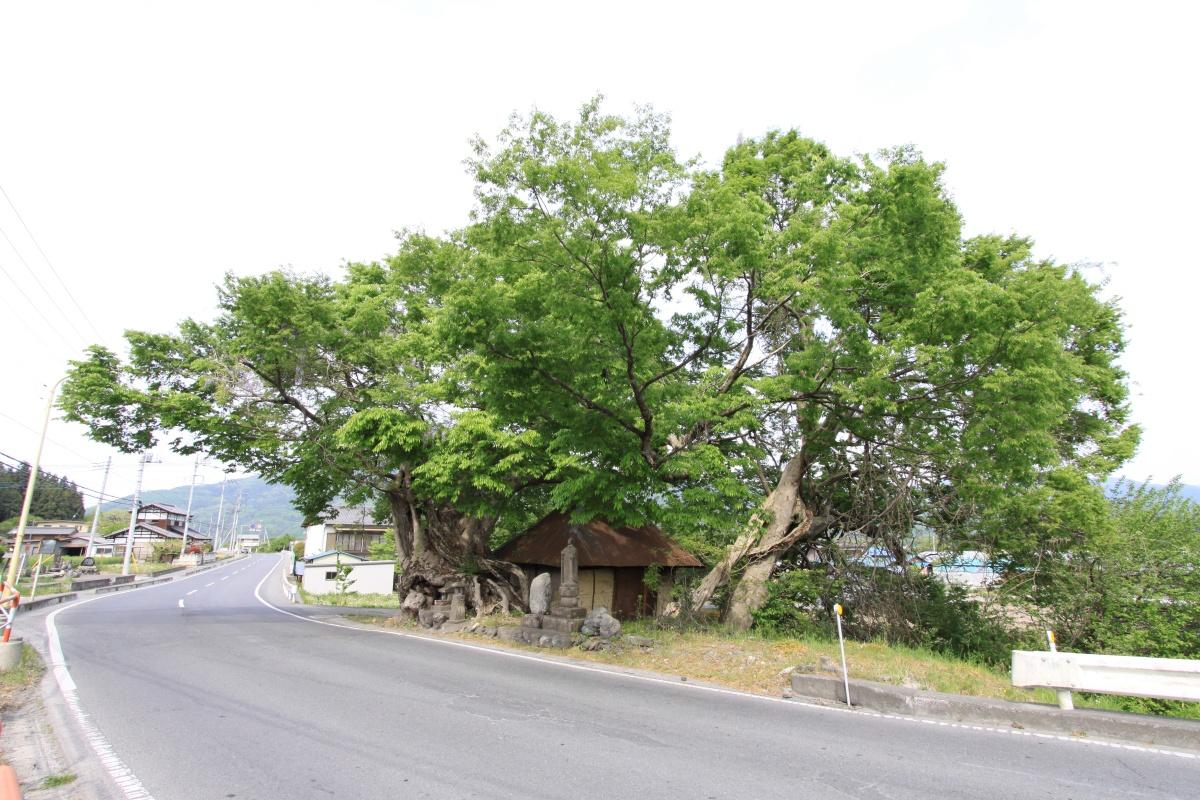 寺尾の大けや木