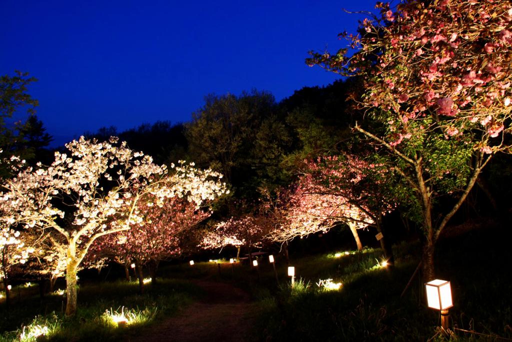 通り抜けの桜ライトアップの画像